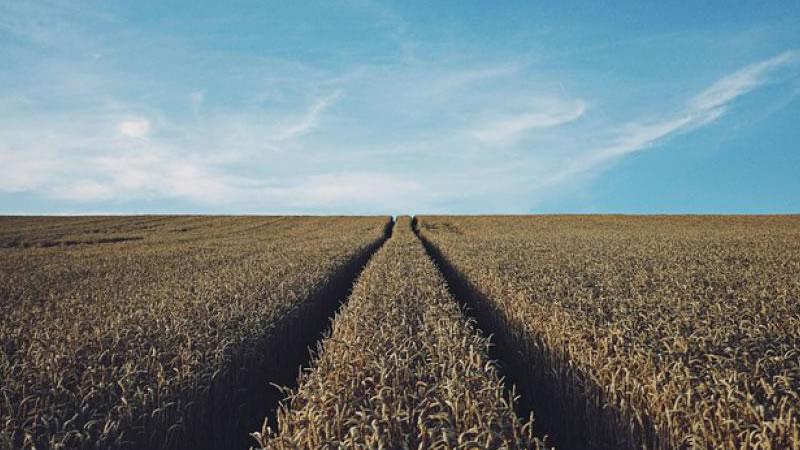 Big Data pode otimizar agricultura