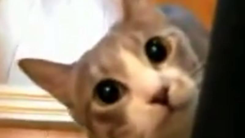 Que gatinho sinistro….